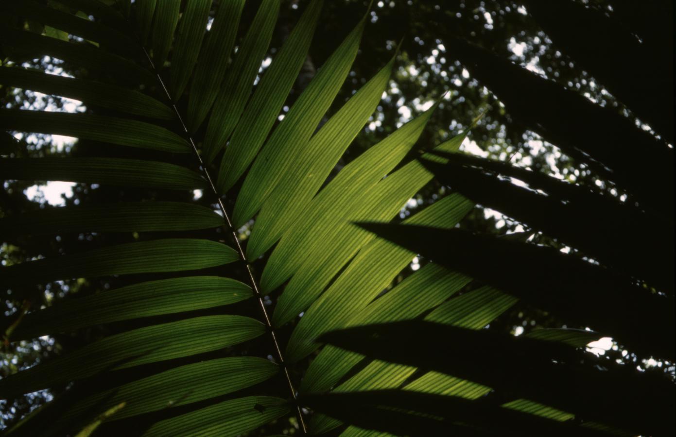jungle2-costa-rica