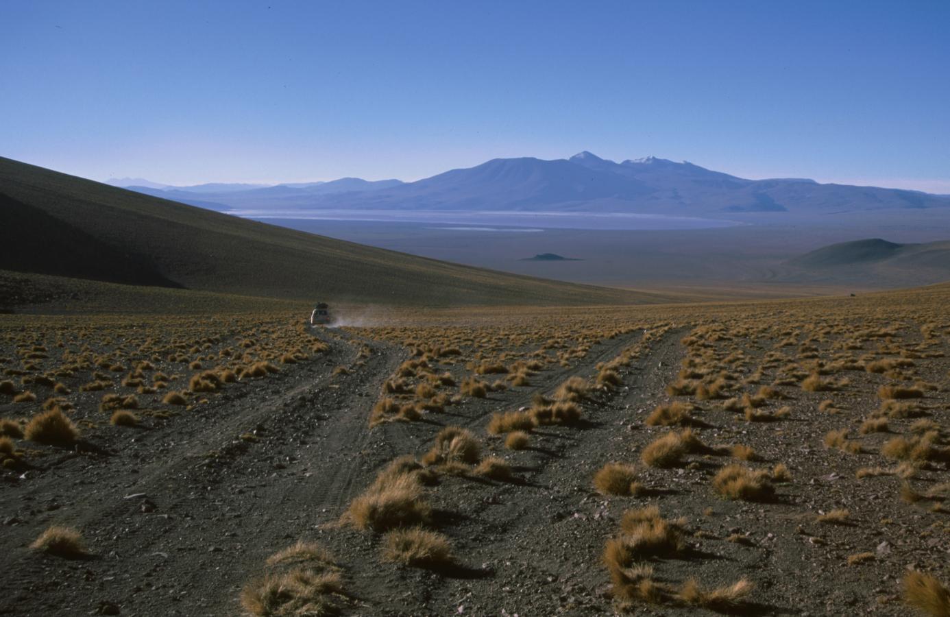 lama-glama-21-bolivia-2001
