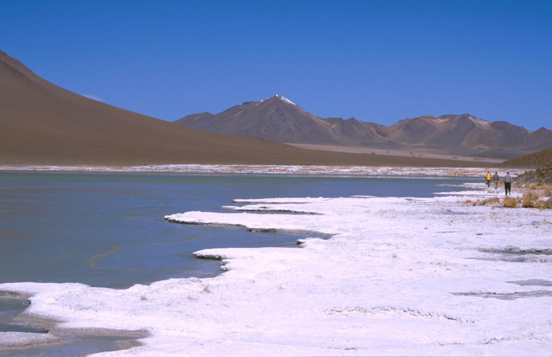 lama-glama-32-bolivia-2001
