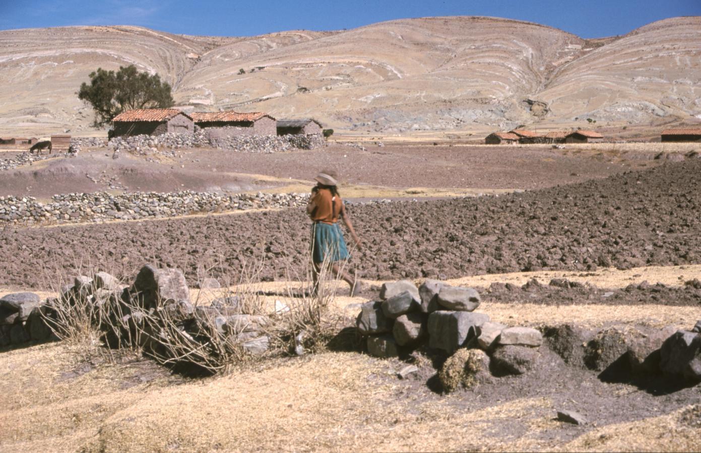 lama-glama-11-bolivia-2001