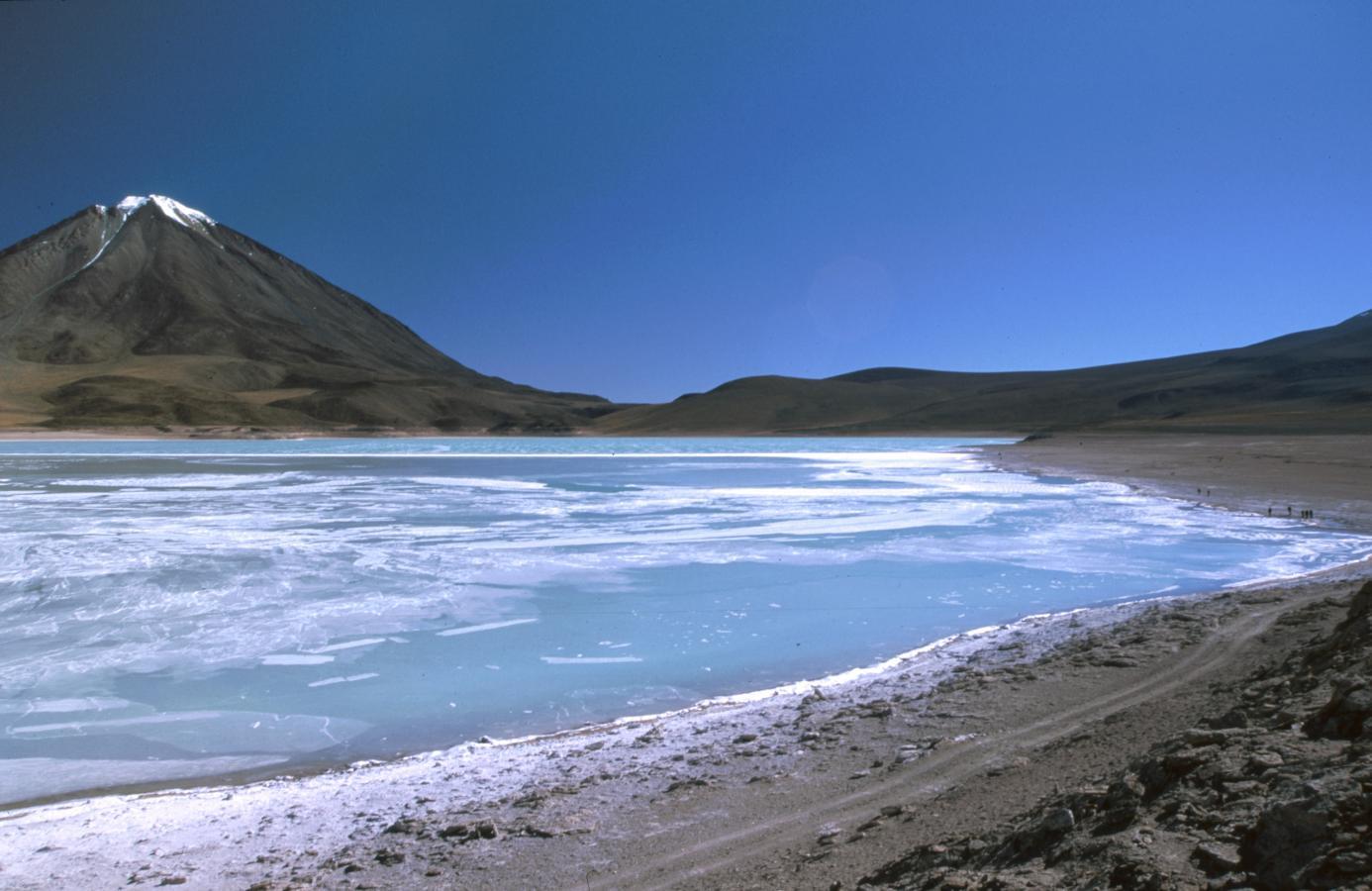 lama-glama-20-bolivia-2001