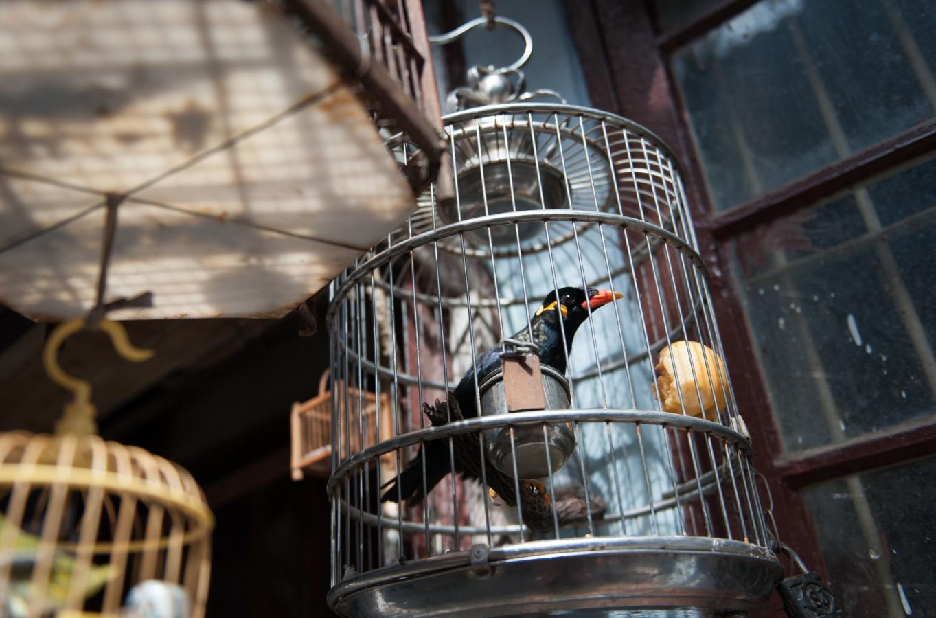 the-talking-bird-shanghai-2010