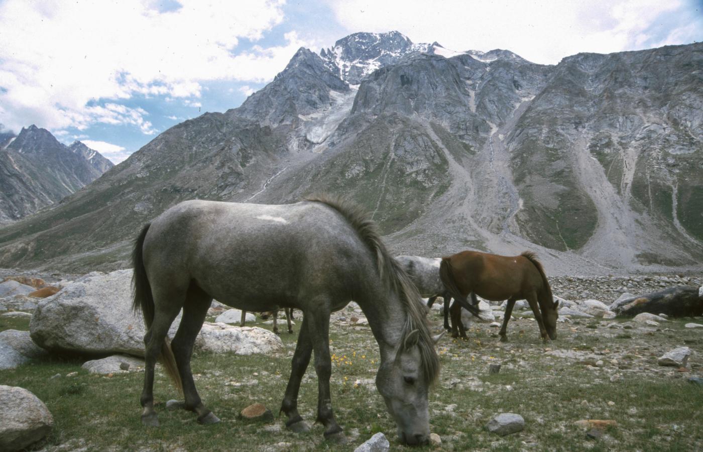 wild-horses-on-route-to-leh-2003