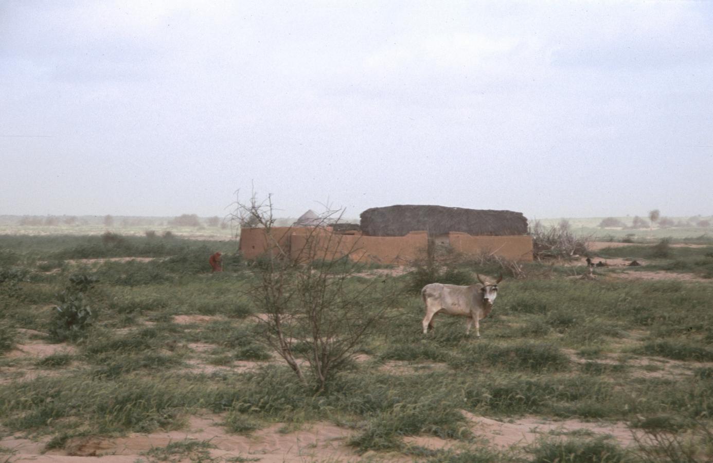 in-the-desert-around-jaisalmer-2003