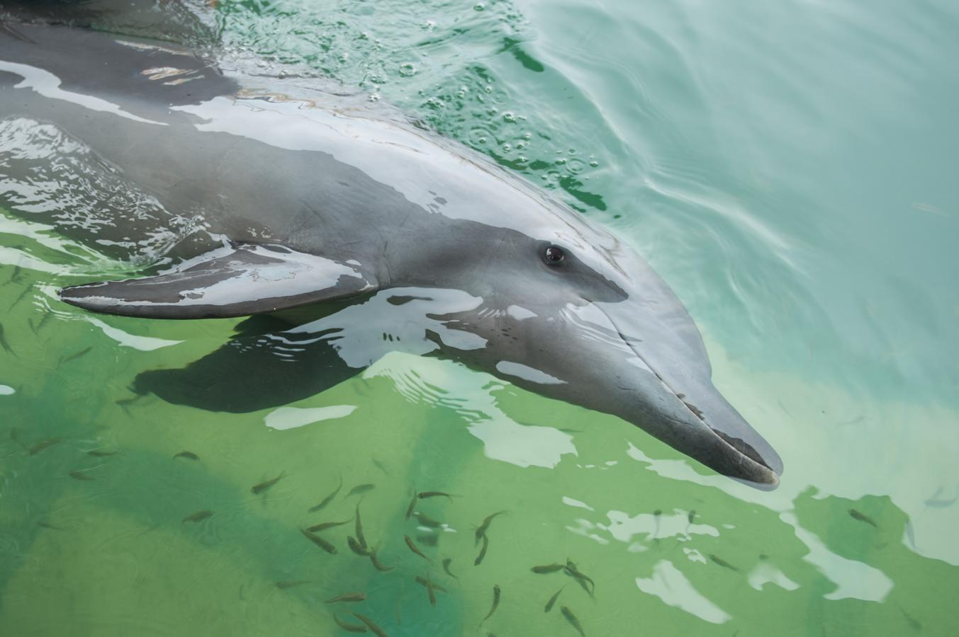 the-dolphin-experience-near-sanur-bali-2013-b